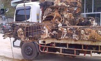 "Alemanno: ""Stop a massacro cani, Italia diserti Europei calcio in Ucraina"""