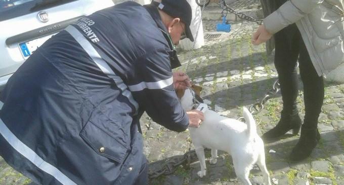 Castel Madama/Intensificati i controlli del Nucleo Tutela Ambiente sui cani portati a passeggio in centro