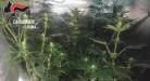 tivoli-la-serra-di-marijuana-rinvenuta-dai-carabinieri-3